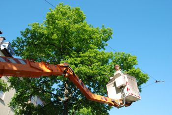 Tree Services in Woburn Massachusetts by J Landscaping