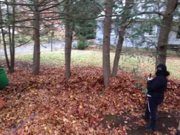 Leaf Removal in South Hamilton by J Landscaping