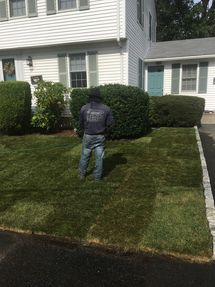 Before & After Sod Installation in Stoneham, MA (2)