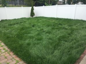 Sod Installed in Everett, MA (2)